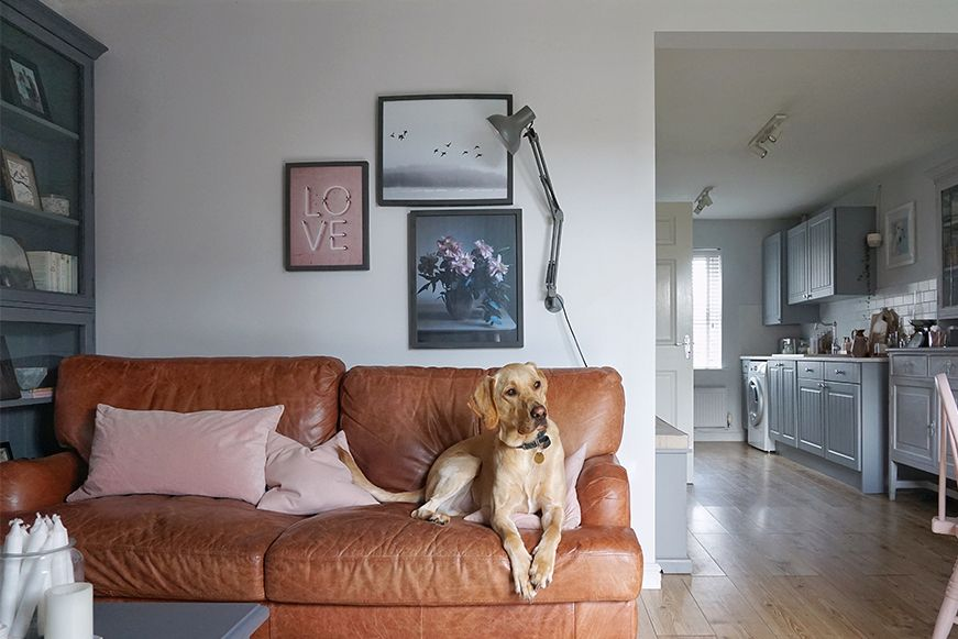 Tan leather sofa and Labrador
