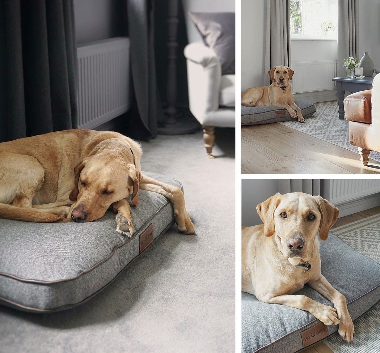 Stylist pet accessories dog bed